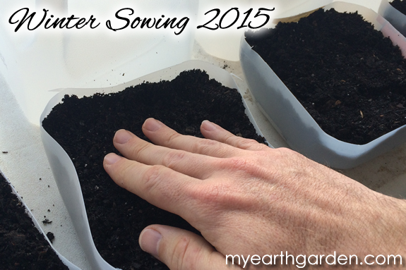 Winter Sowing 2015 - 3
