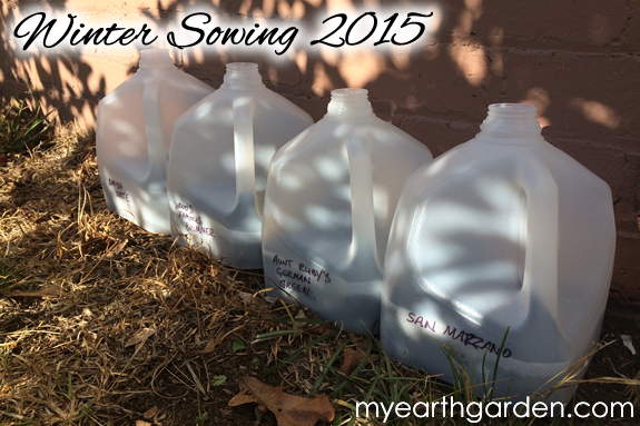 Winter Sowing 2015 - 4