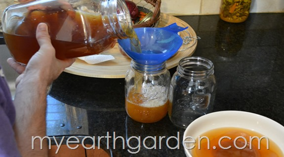 Kombucha | My Earth Garden