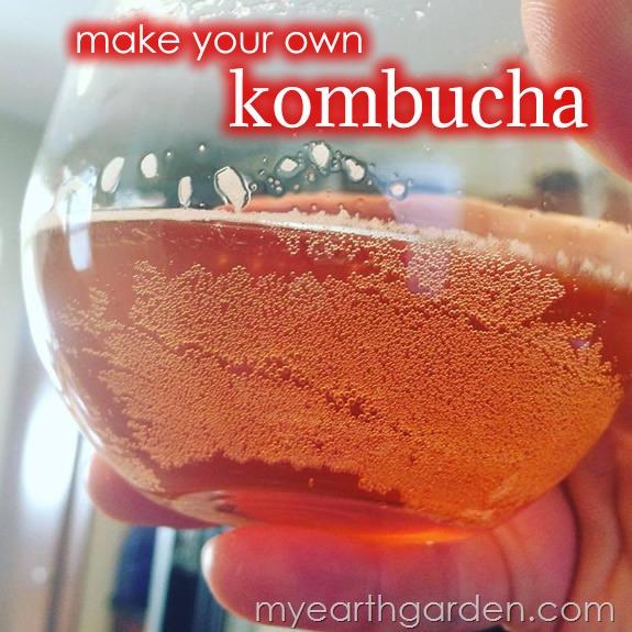Make your own kombucha