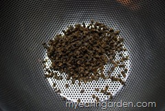 Lemon Basil Seeds