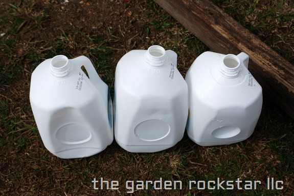 My Earth Garden: Milk Jugs for Winter Sowing