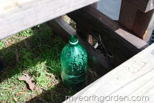 My Earth Garden: Winter Sowing Under the Steps